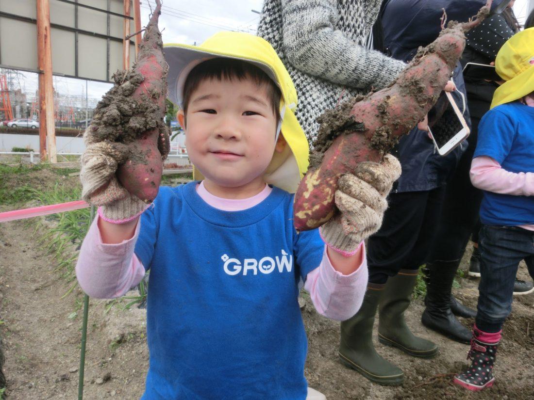 Potato picking 2016