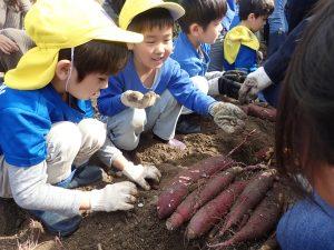 Potato Picking Event:  2019
